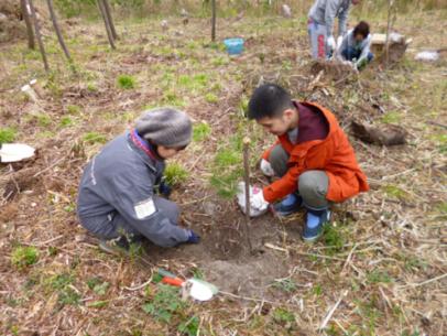 植林の様子。40センチくらいなった3年生の苗を植えます(写真提供:NPO法人いわきの森に親しむ会)