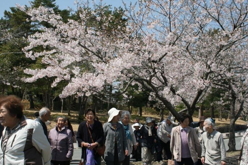 桜はきれいだし、やっぱり地元はいいなぁ。